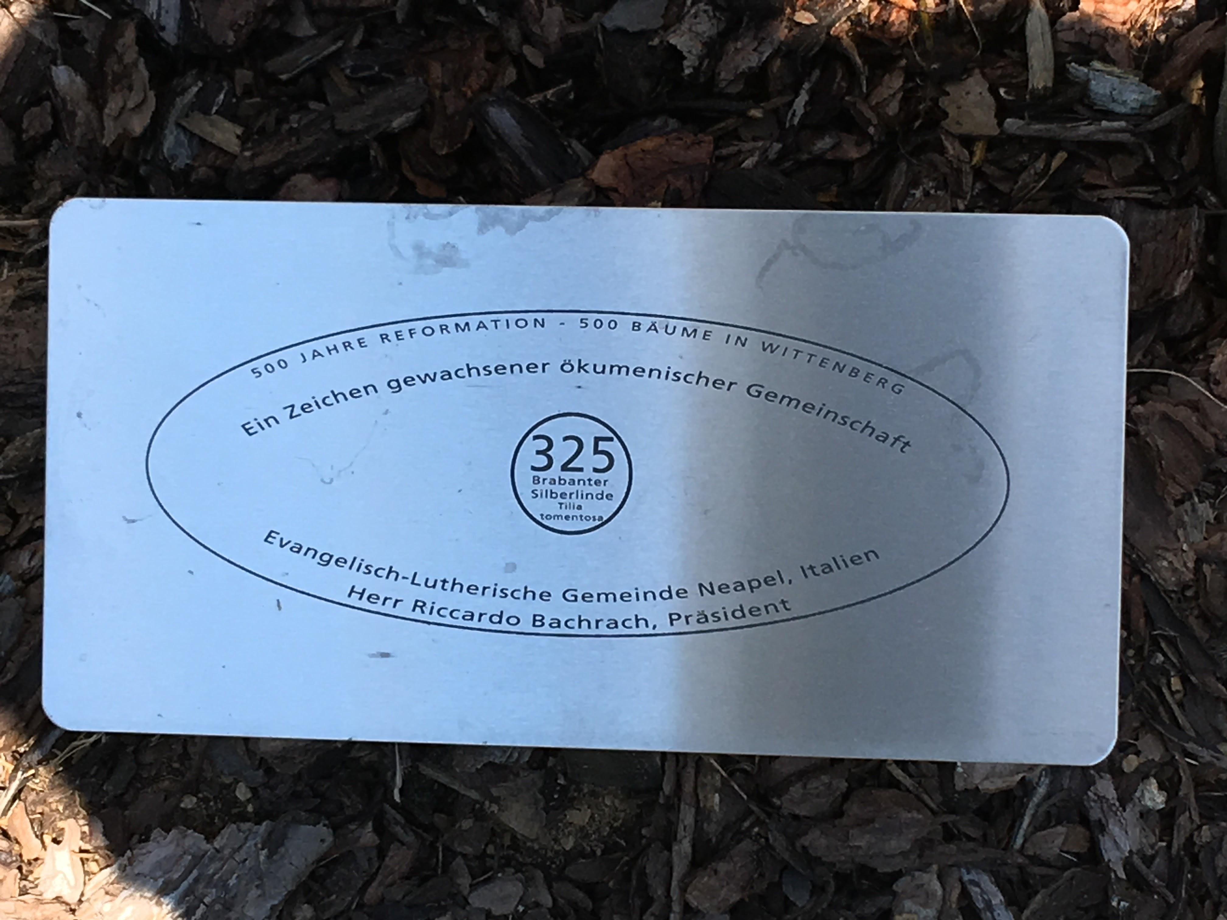 targa albero Wittenberg